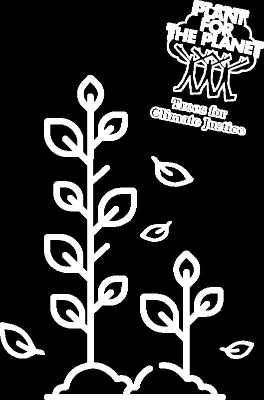 abimerch bäume pflanzen